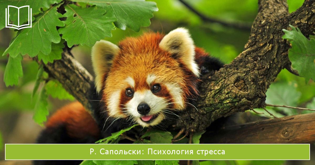 книги о стрессе: Психология стресса Р. Сапольски