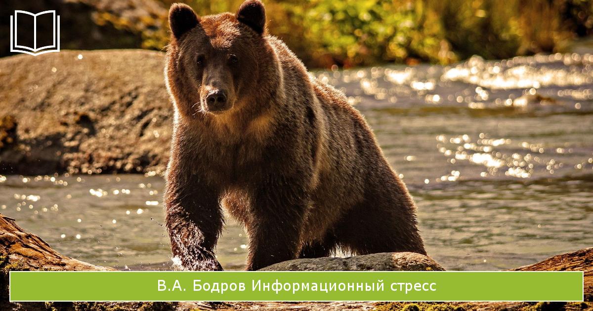 книги о стрессе: Информационный стресс В.А. Бодрова